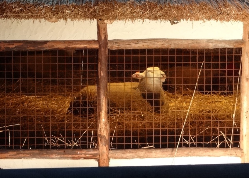The animals (real, not mannequins) were at least more jolly in their composure. He's a very contented sheep indeed