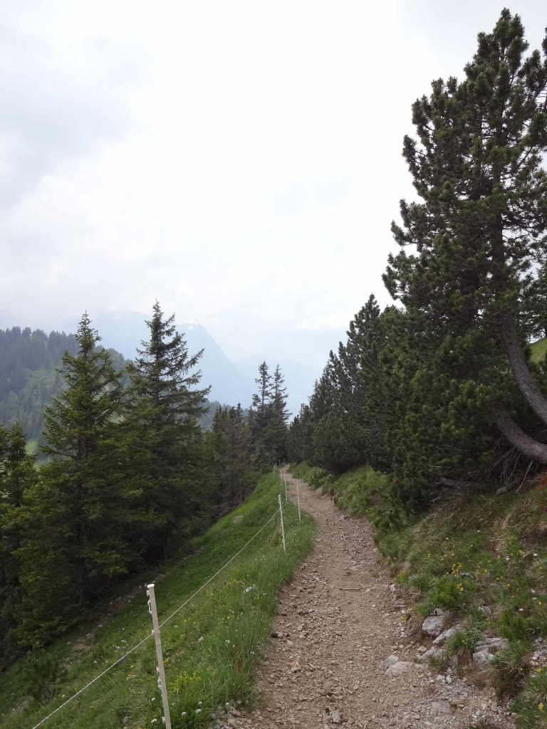 Not long after I began my decent, I reached a valley and the trail became much easier under foot. The 'fence' here was only temporary. Maintenance men were putting in new posts and ropes at the time