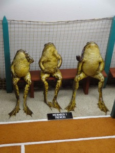 And lastly, my favourite arrangement: three frogs smoking whilst watching tennis. The one on the left looks remarkably like UKIP leader Nigel Farage ... or should that be Nigel Frogage?