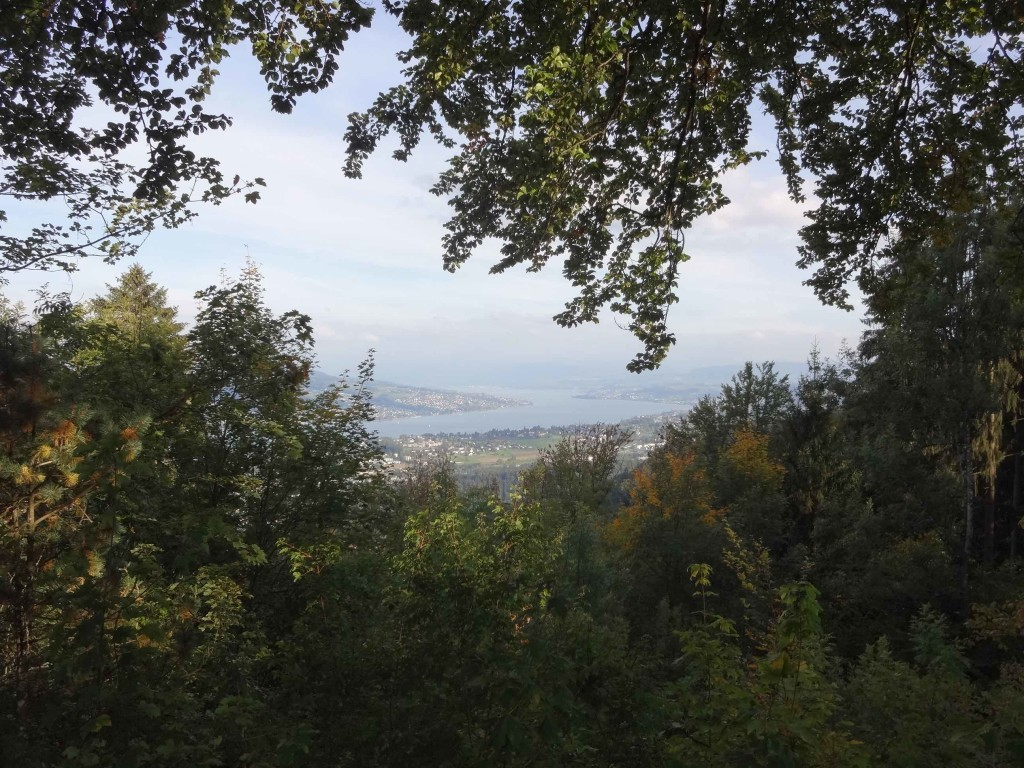 Lake Zurich seen through the trees near Saturn